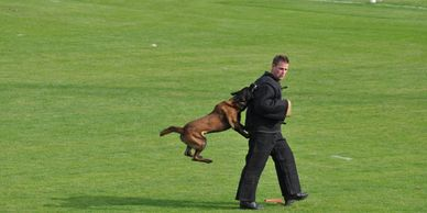 K-9 Training School Police Dual Purpose  Explosive Detection  Narcotic Detection  Tracking Dog