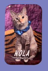 "Nola ""The Princess"" Button/Magnet"