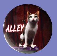 Alley AcroCat and World Record Holder! Button/Magnet