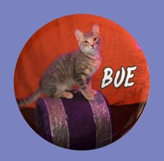 Bue Button/Magnet