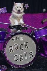 Sponsor a Senior Acro-cat: Dakota the drummer!