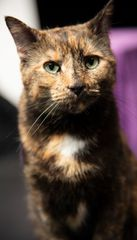 Sponsor an Acro-cat: Sookie the Airhead!