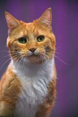 Sponsor an Acro-cat: Buffy the Wallflower