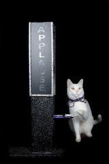 Sponsor an Acro-cat: Albacore Tuna
