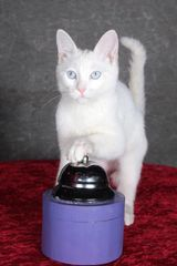 Sponsor an Acro-cat: Ahi Tuna the Princess!