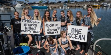 One Ocean Diving promoting a whale shark wetsuit that donates back to the protection of sharks