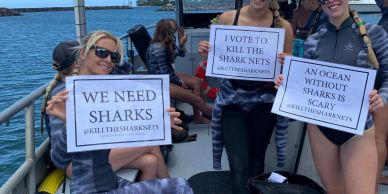 A campaign to help save sharks in Australia filmed on Mano Kai during a dive with One Ocean Diving