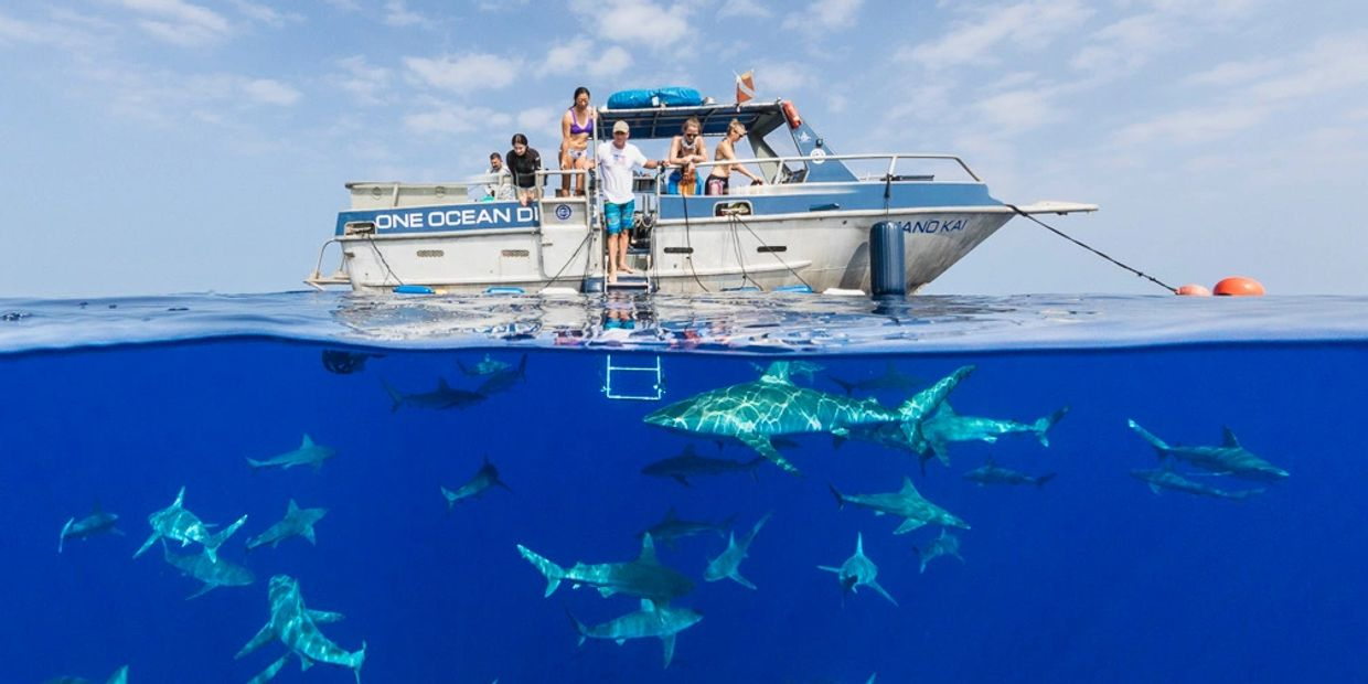What a shark dive looks like with One Ocean Diving. This is our biggest boat Mano Kai, with sharks. Shark Diving Hawaii. One Ocean Diving.