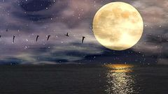 Moon Peace