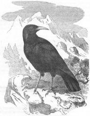Raven's Revelations