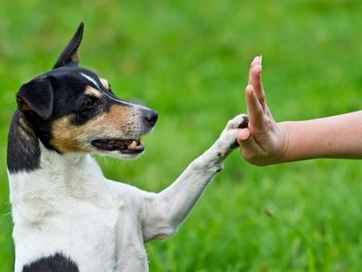 Dog obedience training in South Florida