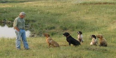 positive hunting gun dog training obedience