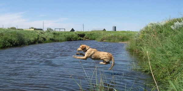 Hunting dog training retrieval from water