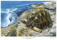 "Sokake: On the Horizon at Cap Sainte Marie, 18"" x 24"" Limited Edition Print"