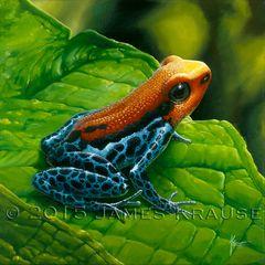 """Ranitomeya reticulata, 12""""x12"""" Original Painting"""