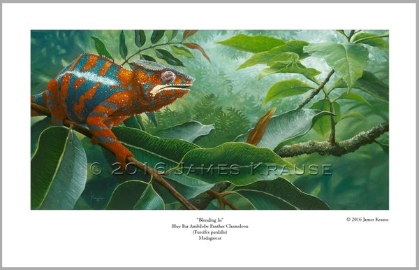 """Blending In"" Panther Chameleon 9"" x 14"" Limited Edition Print"