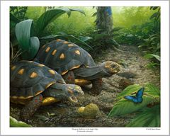 """""""Wayapopi: Redfoots on the Jungle's Edge."""" 16"""" x 20"""" Limited Edition Print"""