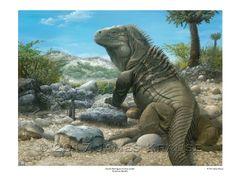 "Ricord's Iguana, 18"" x 24"" Limited Edition Print"