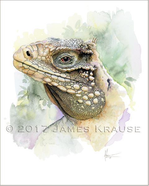 "Cyclura nubila caymanensis. Watercolor, 8"" x 10"" Framed Original Painting"