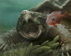 """America's Fragile Armor. Alligator Snapping Turtle (Macrochelys temminckii)."" 11"" x 14"" Canvas Giclee"