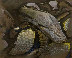 """Lying In Wait"" Original Acrylic Painting of Reticulated Python on Canvas"