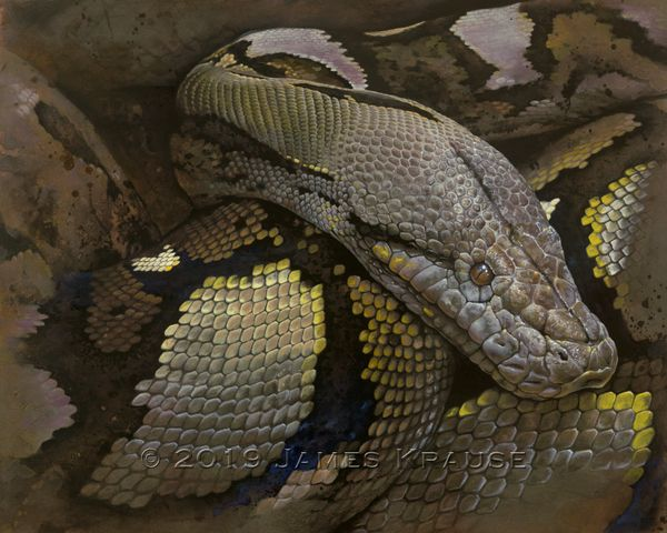 """""""Lying In Wait"""" Original Acrylic Painting of Reticulated Python on Canvas"""