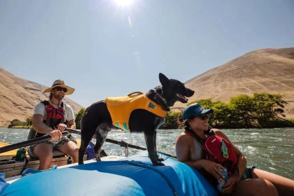 Float Coat - Dog Life Jacket (Ruffwear)