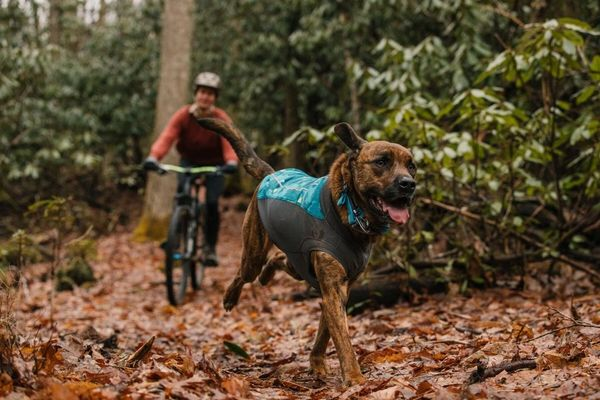 Climate Changer Dog Fleece Pull Over
