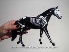 Painted Raven The Skeleton Horse Model- #3h