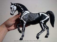Painted Raven The Skeleton Horse Model- #4c