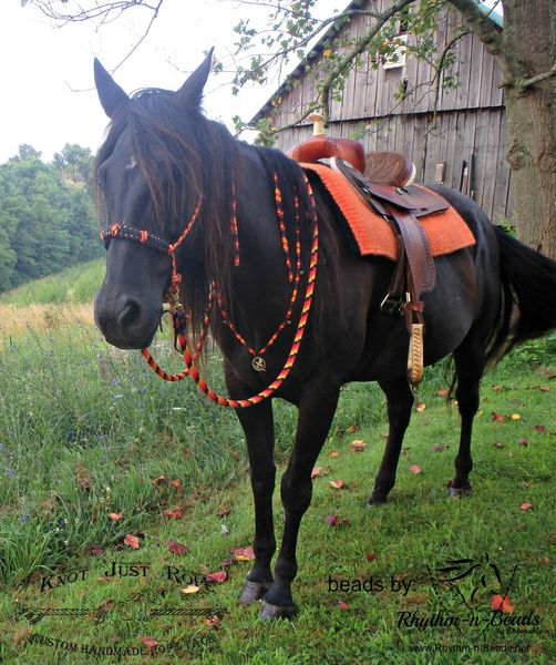 Knotty Training Halter Bitless Bridle Sidepull