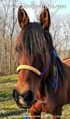 Specialty Wrapped Nose Rope Halter