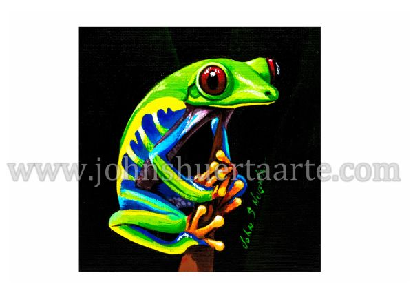 Red Eye Tree Frog art greeting card