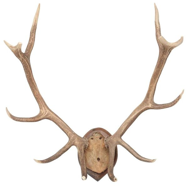 Mid-Century Modern White Tail Deer Buck Antlers Horns on Wall-Mounted Plaque