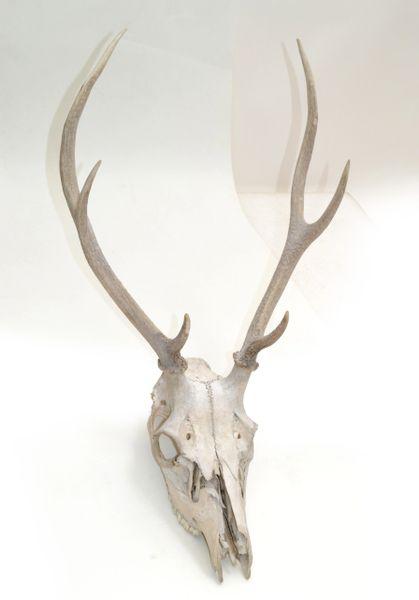 Vintage Taxidermy Forrest Deer Antlers Horns Folk Art