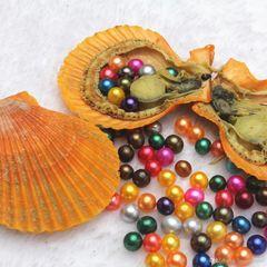Scallop Oyster w/ Edison Pearl