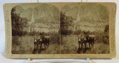 Vintage Underwood & Underwood Stereoview Card Mules & Waterfall 1902