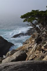 Point Lobos Canvas Print 24x36