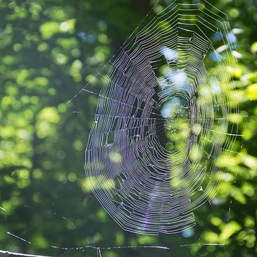 Sunlit spider web in the woods in summer.