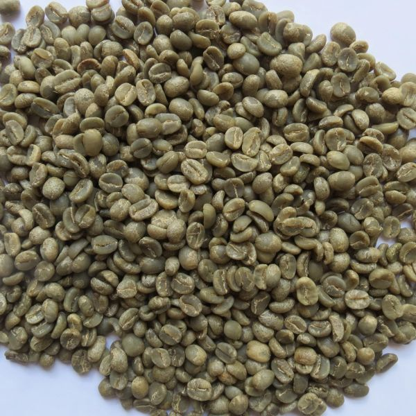 Unroasted Green Coffee Beans 3 Pounds Cafe Las Misiones