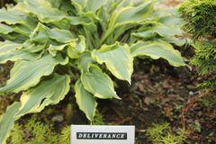 Deliverance [M]