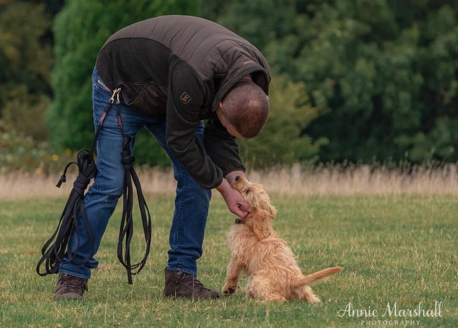 DOG TRAINER SEVENOAKS DOG TRAINING SEVENOAKS PUPPY TRAINER SEVENOAKS DOG BEHAVIOURIST SEVENOAKS