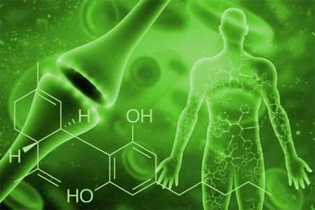 The endocannabinoid system and overall health.