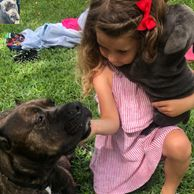 Black Cane Corso, black cane Corsos, black cane Corso puppies, cane Corso puppies for sale near me,