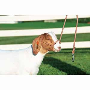 Sheep/Goat Rope Halter w/Snap