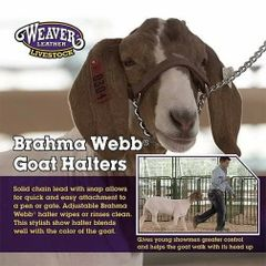 Brahma Webb Goat Halter