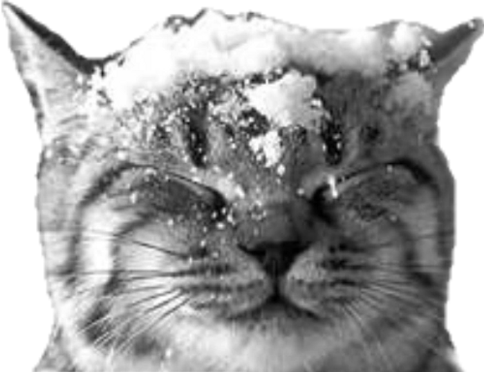 This cat seems to be enjoying the snow.  Some cats are not so lucky - they live on the streets.