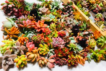 Assorted succulent cuttings by Chopstick and Succulents.