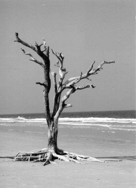 lone tree (b/w)