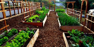 Organic vegetable gardens in Malibu, CA